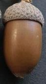 acornstrap3